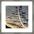 Lace Leaf 4 Framed Print