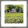 Landscape With Vineyard Framed Print by Werner Lehmann