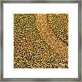 Lawn Covered With Fallen Leaves Framed Print