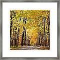 Leaf Lit Path Framed Print