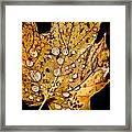 Leafwash Framed Print