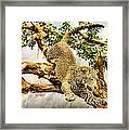 Leaping Leopard Framed Print