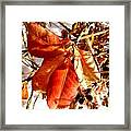 Leaves And Small Berries  Framed Print