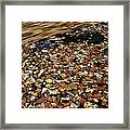 Leaves Floating On River Water Framed Print