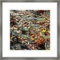 Leaves On The Boardwalk Framed Print