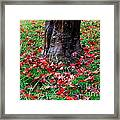 Leaves On The Ground Framed Print