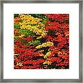 Leaves On Trees Changing Colour Framed Print