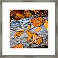 Leaves3 Framed Print