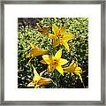 Lemon Lily Framed Print by Steve Huang