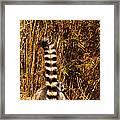 Lemur Tail Framed Print