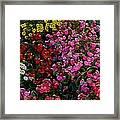les fleurs II Framed Print