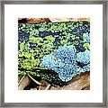 Lichen On Fallen Branch Framed Print