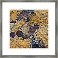 Lichen Pattern Series - 10 Framed Print