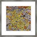 Lichens Framed Print