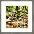 Life On The Rocks Framed Print