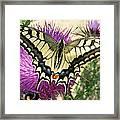 Lifes Harmony  Framed Print