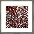 Light Micrograph Of Smooth Muscle Tissue Framed Print