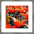Lilies In Bloom Framed Print