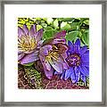Lilies No. 29 Framed Print