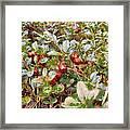 Lingonberry Framed Print