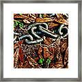 Links And Leaves Framed Print