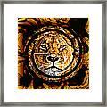 Lioness Face Framed Print
