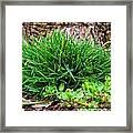 Little Grass Mound Framed Print