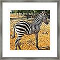 Little Stripes Framed Print