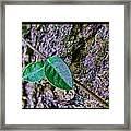Little Vine Framed Print