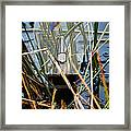 Living In Glass Houses Framed Print by Ronel Broderick