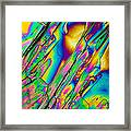 Lm Of Tartaric Acid Crystal Framed Print