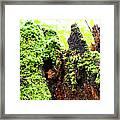Log Moutain Framed Print