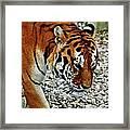 Lonely Tiger Framed Print