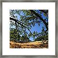 Looking Through The Oaks Framed Print