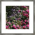 Lots Of Blooms Framed Print