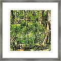 Louisiana Wetland Framed Print