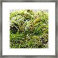 Lovely Green Lichen Framed Print