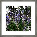 Lupine Patch Framed Print