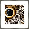 Macrophotograph Of Owl Butterfly Wing Framed Print