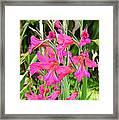 Magenta Flowers Framed Print
