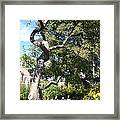 Magestic Tree Framed Print