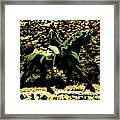 Magic Ride Framed Print