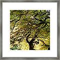 Magical Tree Framed Print