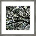 Magnolia Meets Live Oak Framed Print