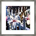 Magnolis's On A Picket Fence Framed Print