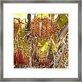 Manzanita Knees Framed Print