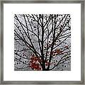 Maple Tree In Autumn Framed Print