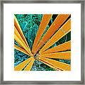 Marine Diatom Algae, Sem Framed Print