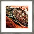 Mata Mata Turtle Framed Print
