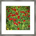 Meadow With Tulips Framed Print
